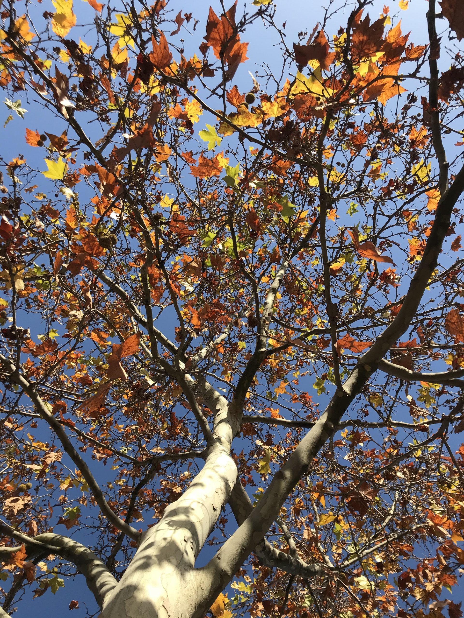 El otoño en Aravaca